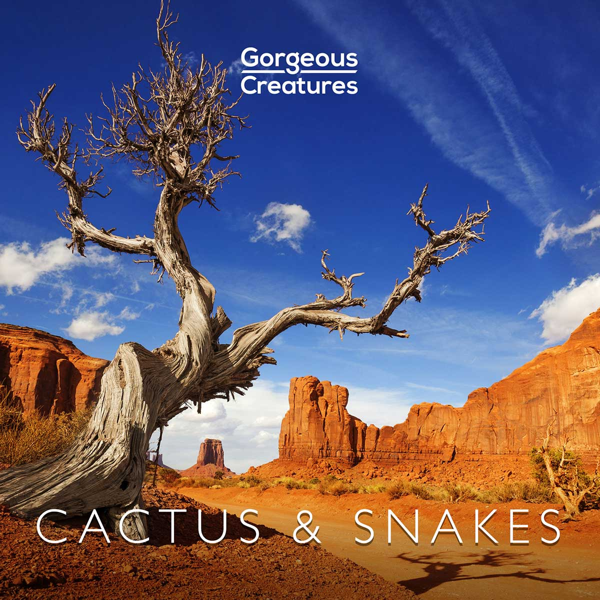 Cactus & Snakes by Gorgeous Creatures